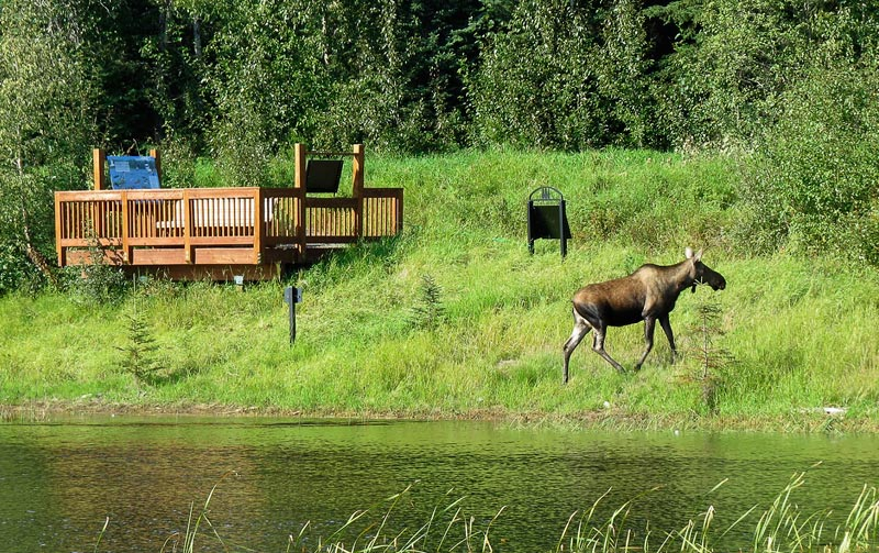 Sanctuary-viewing-platform-with-moose